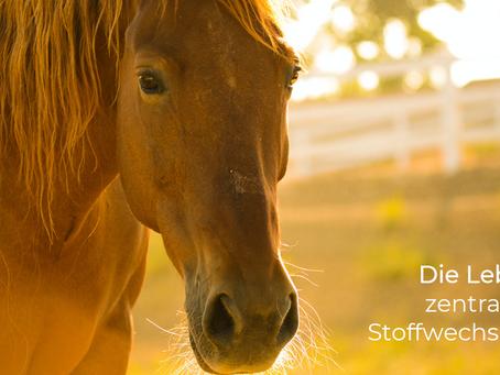 Die Leber beim Pferd sinnvoll und nachhaltig unterstützen