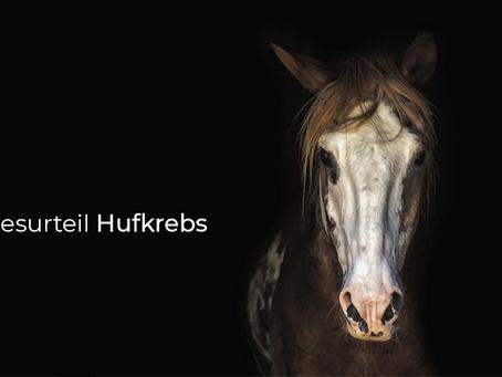 Todesurteil Hufkrebs - ist dem Pferd noch zu helfen?