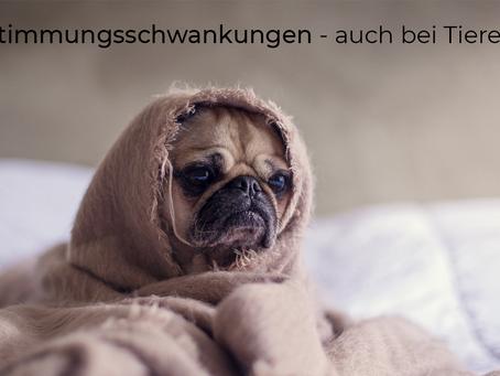 """""""Stimmungsschwankungen"""" bei Hund und Pferd"""