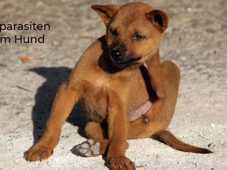 Ektoparasiten beim Hund: Das große Krabbeln beginnt