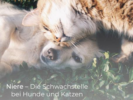 Nierenerkrankungen bei Hunden und Katzen