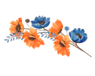 367-3675863_blue-and-orange-flower-hd-pn