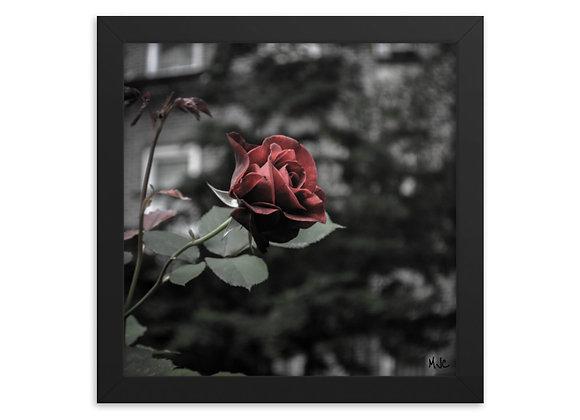 Last Rose Standing- Framed poster