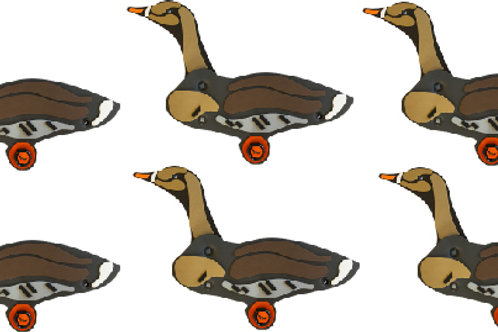 Specklebelly Goose Sixes