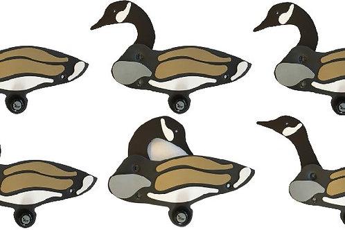 Canada Goose Sixes