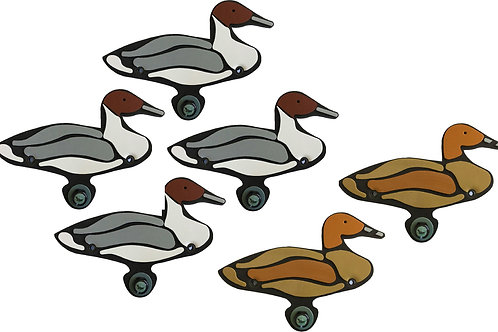 Northern Pintail Sixes