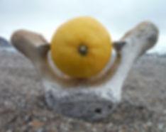 lemoncover.jpg