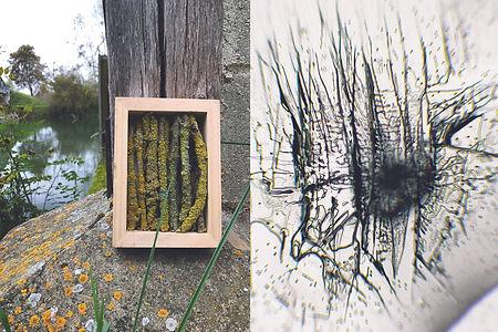 Mossy Sticks FINlo.jpg