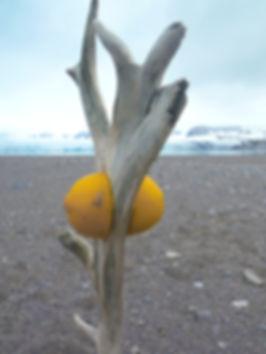 lemonLOW.jpg