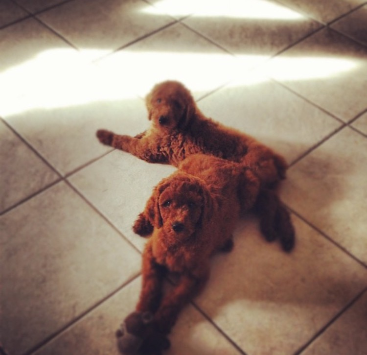 Redheaded Poodle ladies as babies