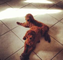 Redheaded Poodle ladies as babies