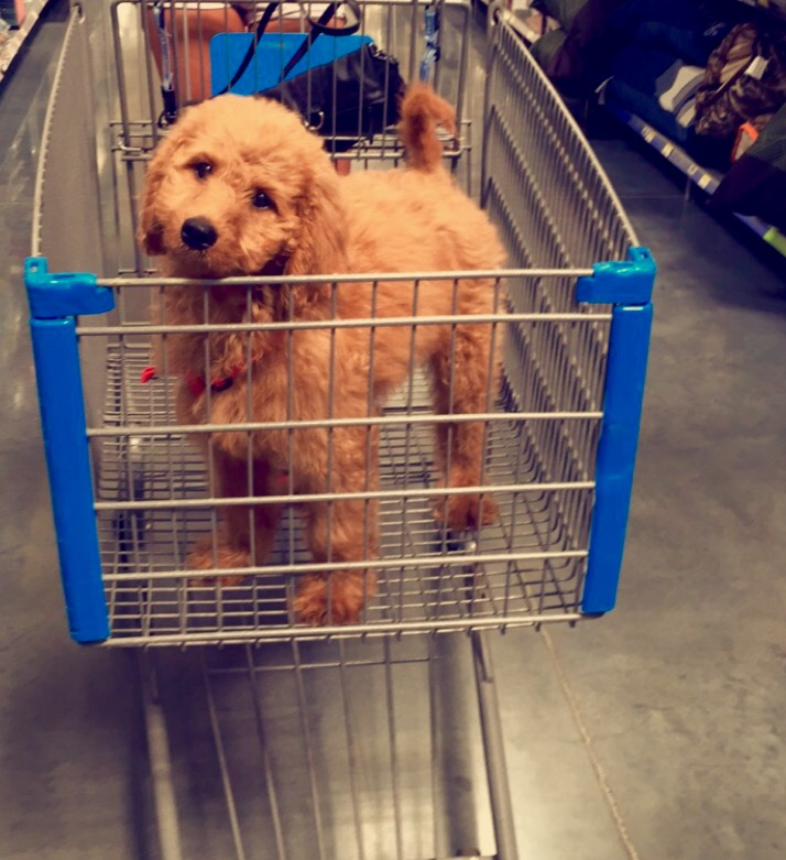 He likes to go shopping