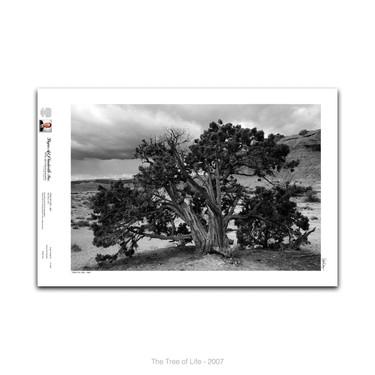 11-005 The Tree of Life.jpg