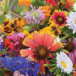 flower-mixes-butterfly-hummingbird-mix.j