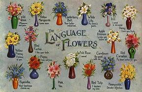 flower meanings.jpeg