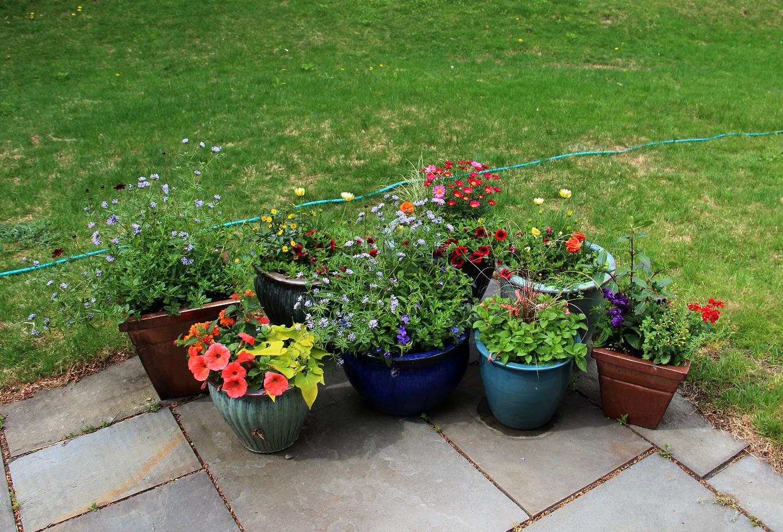 the shy gardener
