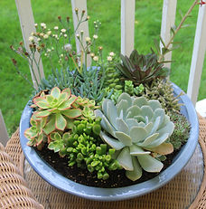 garden tips and projects
