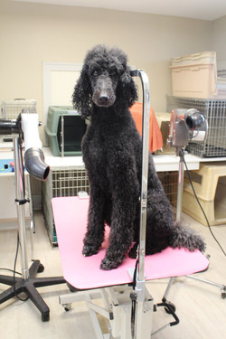 """""""Andy"""" in for his Spa Treatment"""