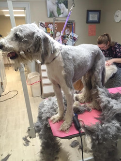 Grooming @ Fluffy Puppy Grooming Spa