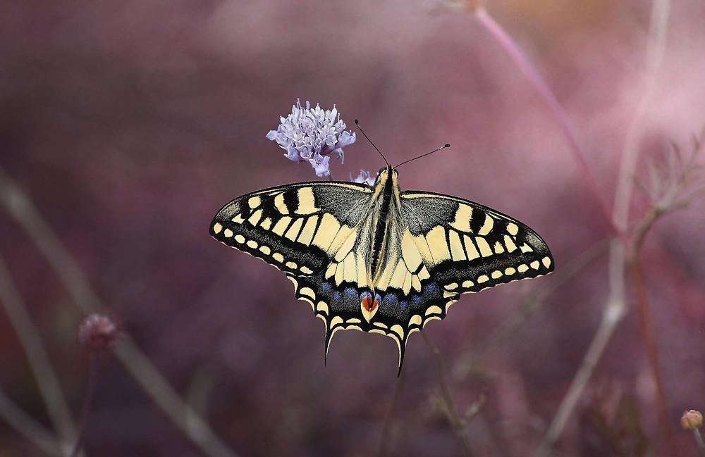 NOVIEMBRE: MES DE LAS TRANSFORMACIONES ¿Oruga o Mariposa??