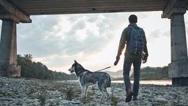 ¿De viaje con tu mascota?