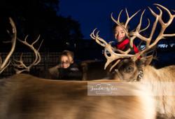 Christmas With Reindeer