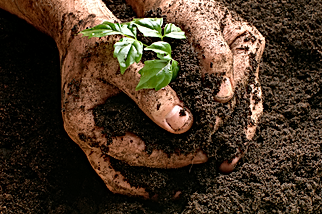 hands_soil.png