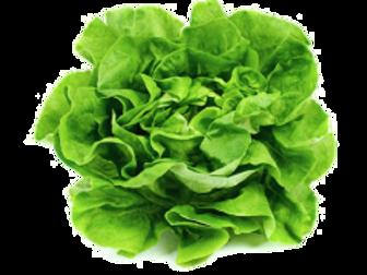 Alface Verde Lisa