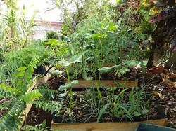 jardin 2020