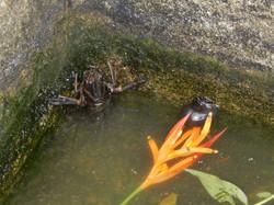 Un petit tour hors du bassin
