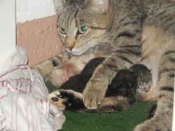 Notre chatte Filou et ses petits