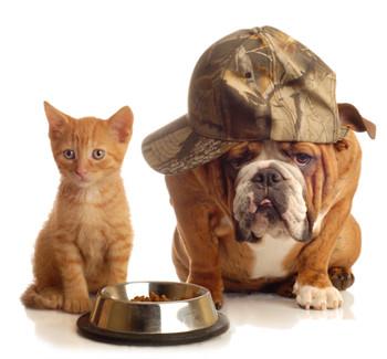 dog-cat-food.jpg