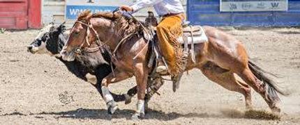 performance horse 1.jpg