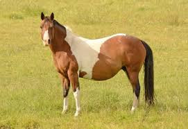 Getting ready to Breed Your Mare