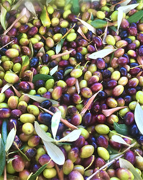 olives from kefalonia