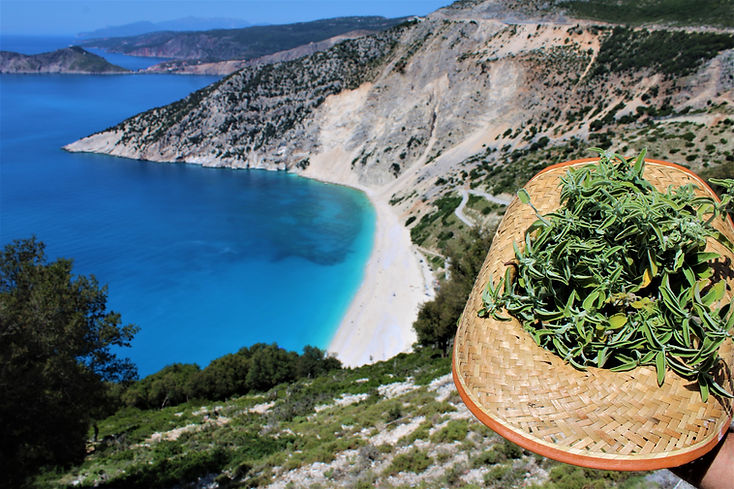 Myrtos Beach with the wild sage harvested in the early summer