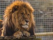 newquay-Zoo.jpeg
