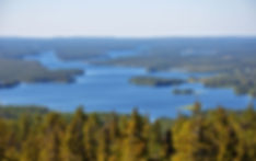 blueberries Finland