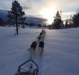 Séjour en Laponie suédoise.jpg