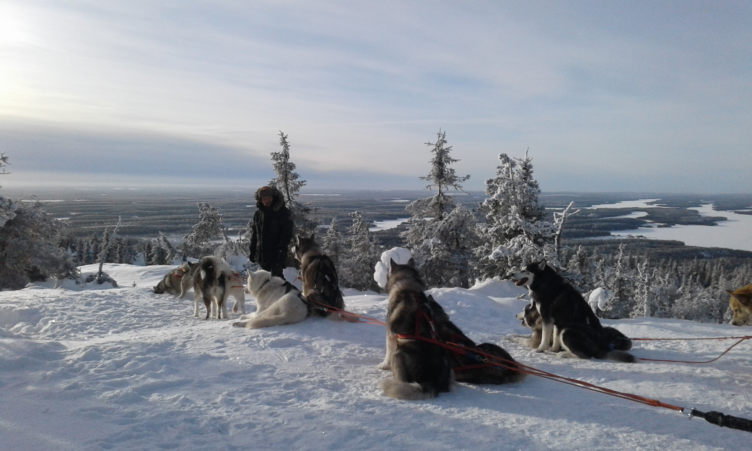 Iivaara sled dogs
