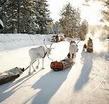 winter market _5.jpg