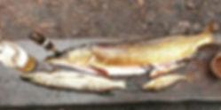 Pêche Finlande