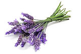 Lavender Aroma at Troy City Cryolounge Oxygen Bar