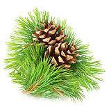 Pine Aroma at Troy City Cryolounge Oxygen Bar