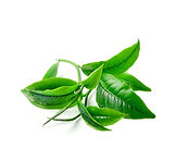 Tea Tree Aroma at Troy City Cryolounge Oxygen Bar