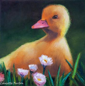 Darla the Duck