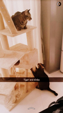 Simba and Tiger
