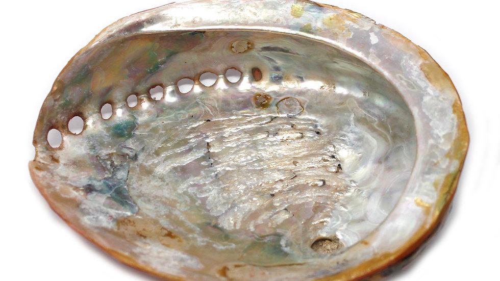 Natural Shell Soap Dish