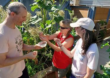 GardenGuru-LettuceHarvest_sm.jpg