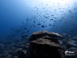 Snorkeling tour at Cano Island, Drake Bay